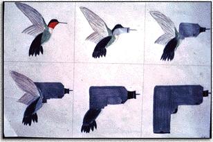 bird_drill