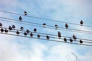 birds_music
