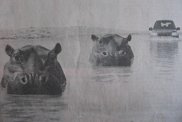 hippos_landrover
